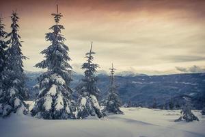 dimmig vintersoluppgång i bergskogen.