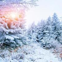 vinterskog täckt med snö. foto