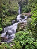mclean falls (Catlins Forest Park Nya Zeeland) foto