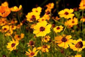 skog av blommor