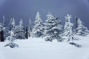 snötäckt skog foto