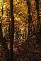 promenader i skogen foto