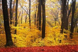 träd i höstskog