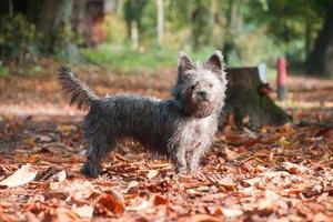 liten hund i skogen foto