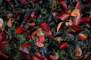 färgglada löv