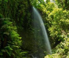 los tilos vattenfall laurisilva i la palma laurel forest