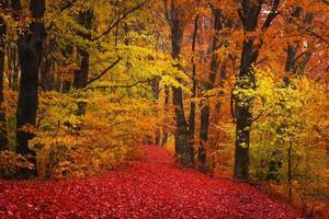 höstens färger i skogen