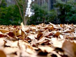 fallna löv i parken