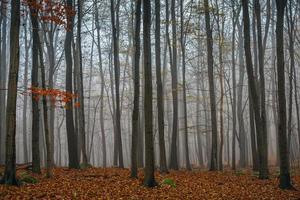 höstdag i den förtrollade skogen foto