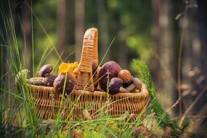 Höstkorg full ätlig svamp skog foto