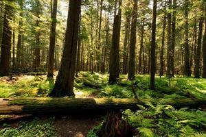 gyllene ljus genom träden foto