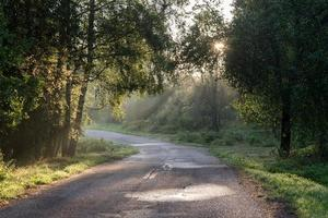 dimmig skogsväg efter regnet på sommaren foto