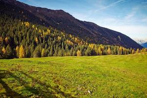 öppet fält med skog i bakgrunden