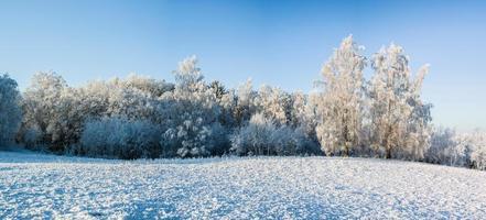 rimfrost foto