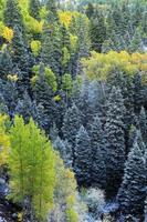 Mount sneffels varierar med nysnö, colorado