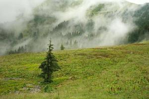 landskap bergskog på regnig dag i dimma