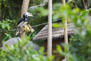 fågelhorn som sitter på en gren i skogen