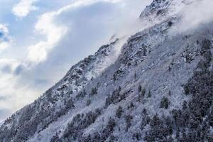 snötäckt skog på sluttningen i gryningen foto
