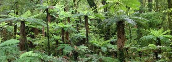 whirinaki skogspark jätte träd ormbunkar, Nya Zeeland