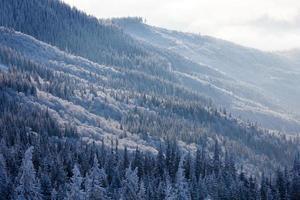 skog i berg på solig morgon på vintern foto