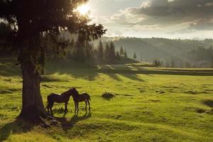 hästar i skogen vid solnedgången under molnig himmel foto