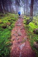 turist på en dimmig stig i vild skog