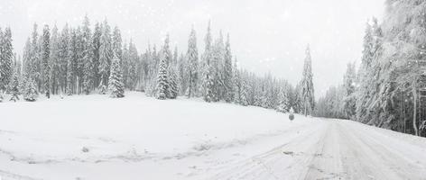 julbakgrund med snöig väg i skogen