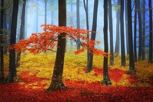 intressant träd i blå dimma inuti skogen