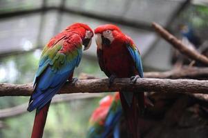 papegoja arara macao på parque dsas aves foto