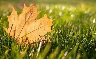 höstgult blad på en grön gräsmatta, naturlig bakgrund foto