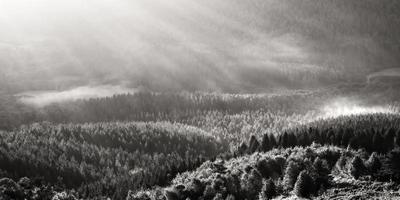 dimmig skog på morgonen foto