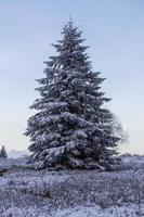Kahler Asten vinterlandskap i Tyskland foto