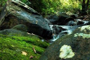 vattenfall med djupgrön skogbakgrund. foto