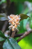 vilda orkidéer i skogen i Thailand foto