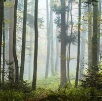 detalj av träd i dimmig skog foto