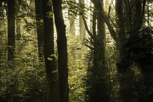 morgonljus in i en atmosfärisk mörk skog. foto