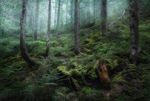mystisk vårskog i dimma. morgon i Ukraina foto
