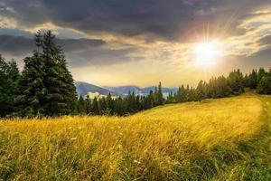 äng på en sluttning nära skogen vid solnedgången foto