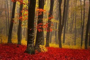 träd på en dimmig morgon i skogen
