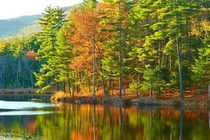 damm i nationell skog för vitt berg, new hampshire foto