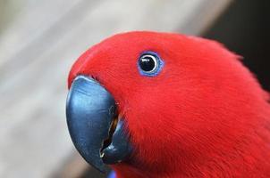 röd papegoja på nära håll - i tropisk skog foto