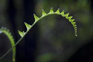 ormbunke i tropisk bergskog foto