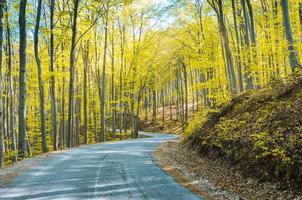öppen skogsväg på hösten