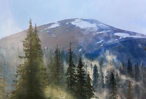 dimmig skog på bergbakgrund foto