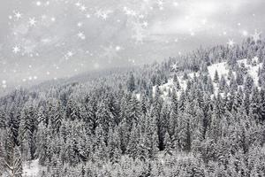 jul bakgrund med snöiga granar foto