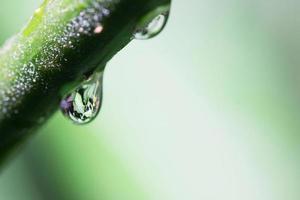 de gröna bladen av vattendroppar foto