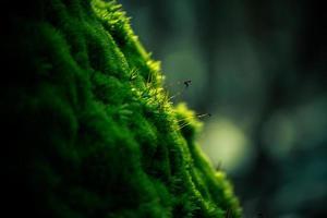 grön mossa på träd