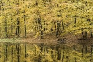 trädreflektion i en skogsjö under hösttiden