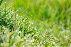 gräs på skogsluckan närbild i solljus foto