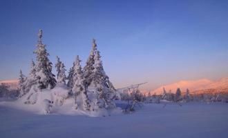 träd i snön i de norra uralerna foto